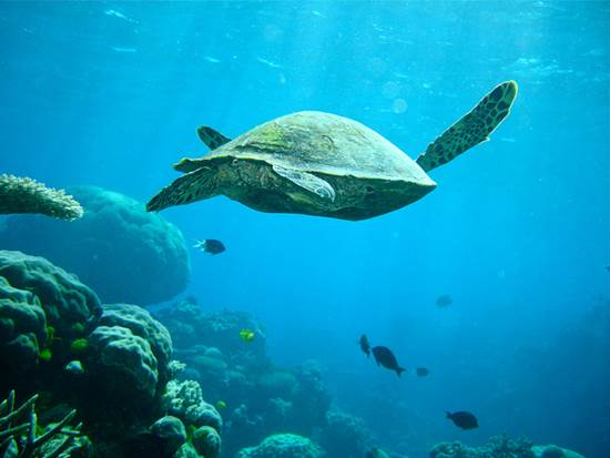 A Great Barrier Reef Overnight Sailing Trip is a Dream Come True 2
