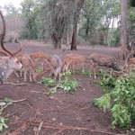 Coorg Tourism: An Insight into Wildlife Tours