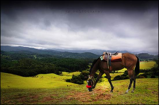 Ooty Tourism - Discover a Prism of Unmatched Natural Beauty 1