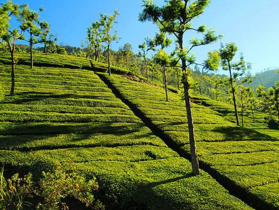 Ooty Tourism - Discover a Prism of Unmatched Natural Beauty 3